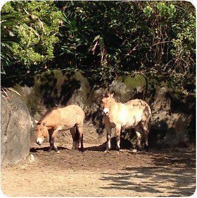 台北市立動物園ロバ