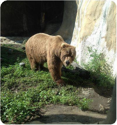 台北市立動物園熊