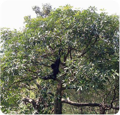 台北市立動物園オラウータン木