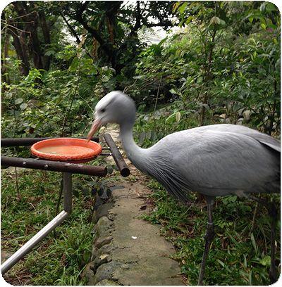 台北市立動物園グレー