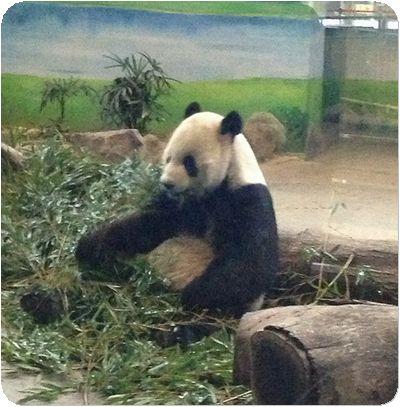 台北市立動物園パパ