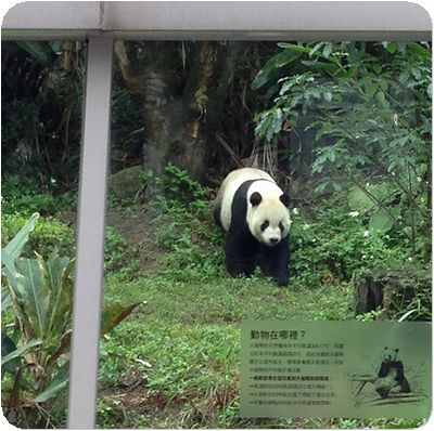 台北市立動物園パパ外