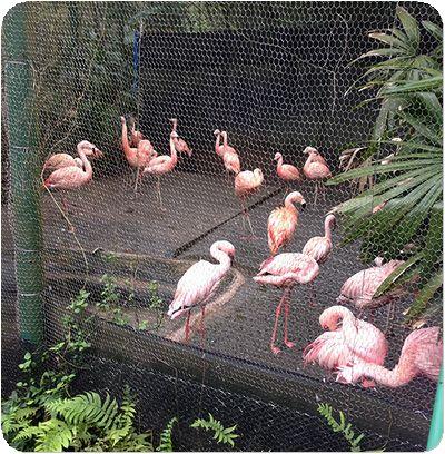 台北市立動物園フラミンゴ