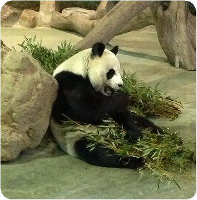 台北市立動物園ママ
