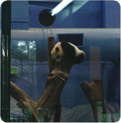台北市立動物寝てる2