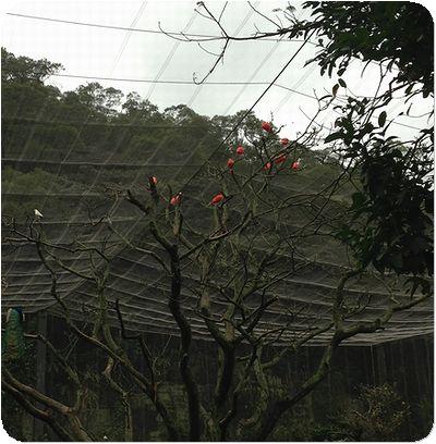 台北市立動物赤い鳥