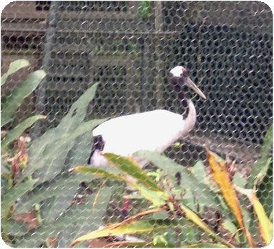 台北市立動物鶴