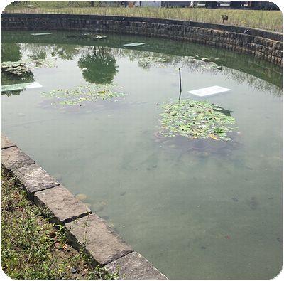 林安泰古厝池