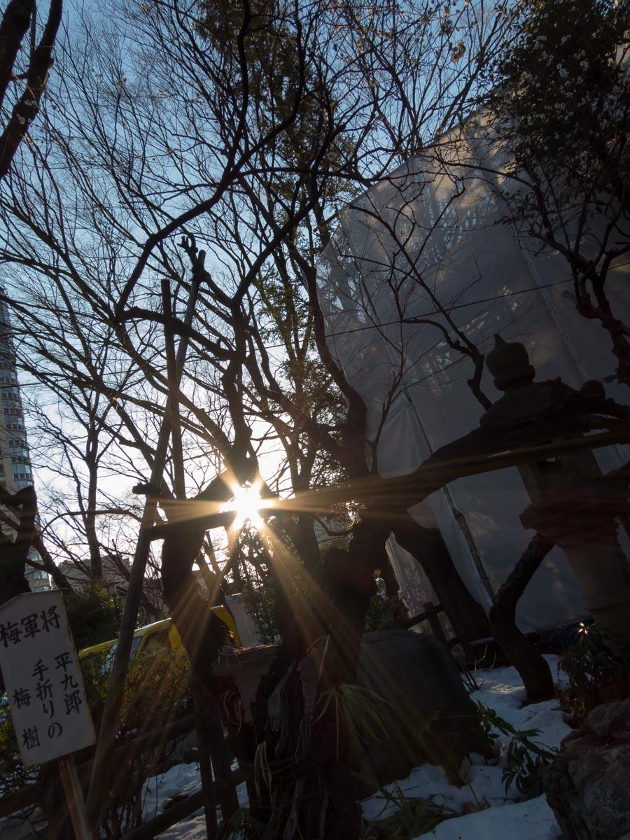 新橋散策(16)