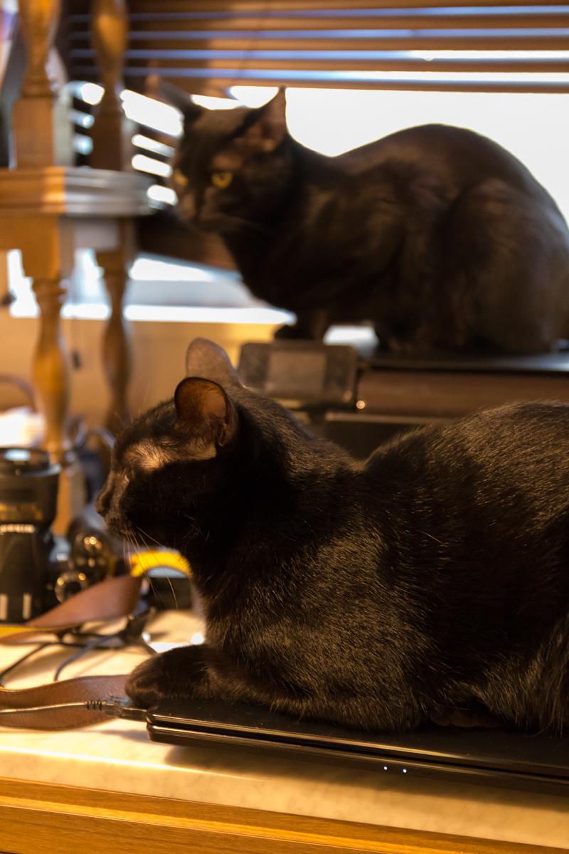 ねこカフェ写真(3)