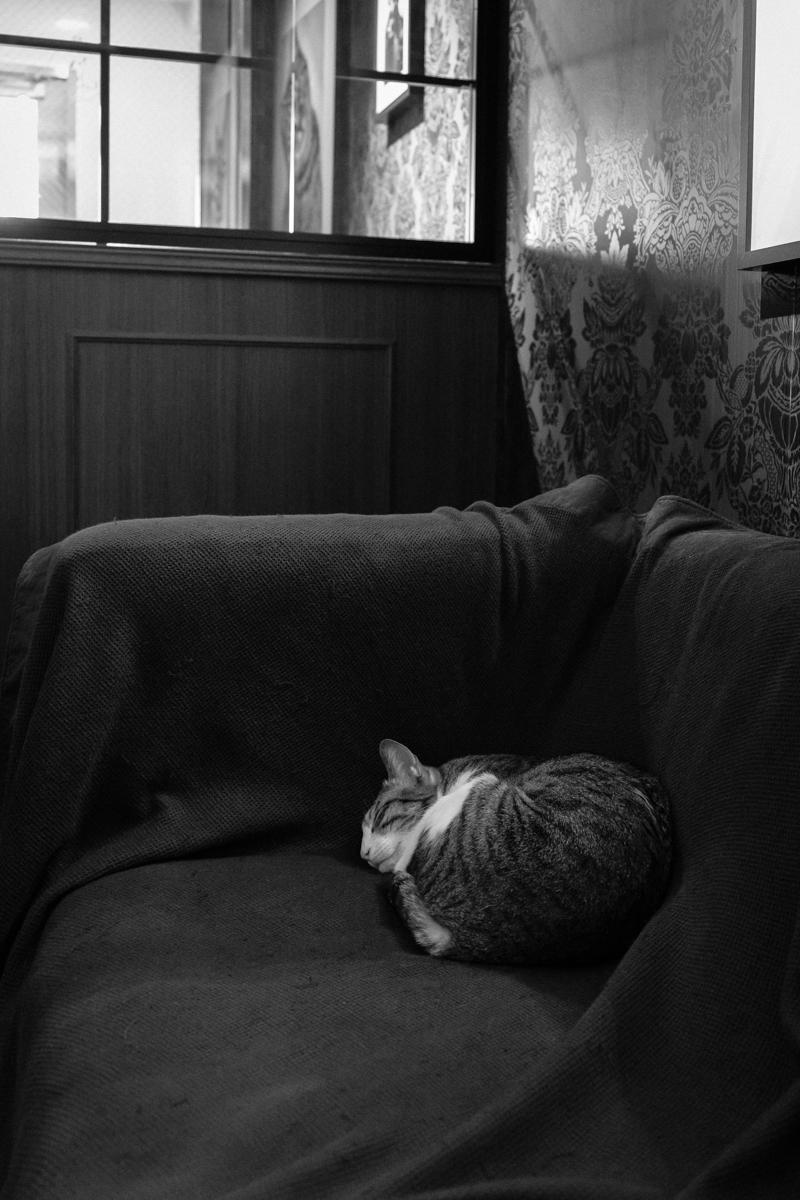 ねこカフェ写真(17)