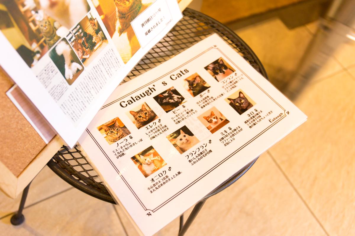 ねこカフェ・説明イメージ(2)
