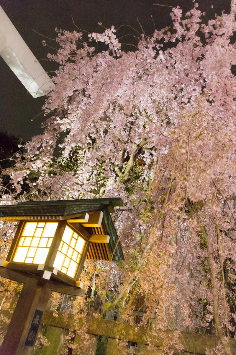乃木神社(1)