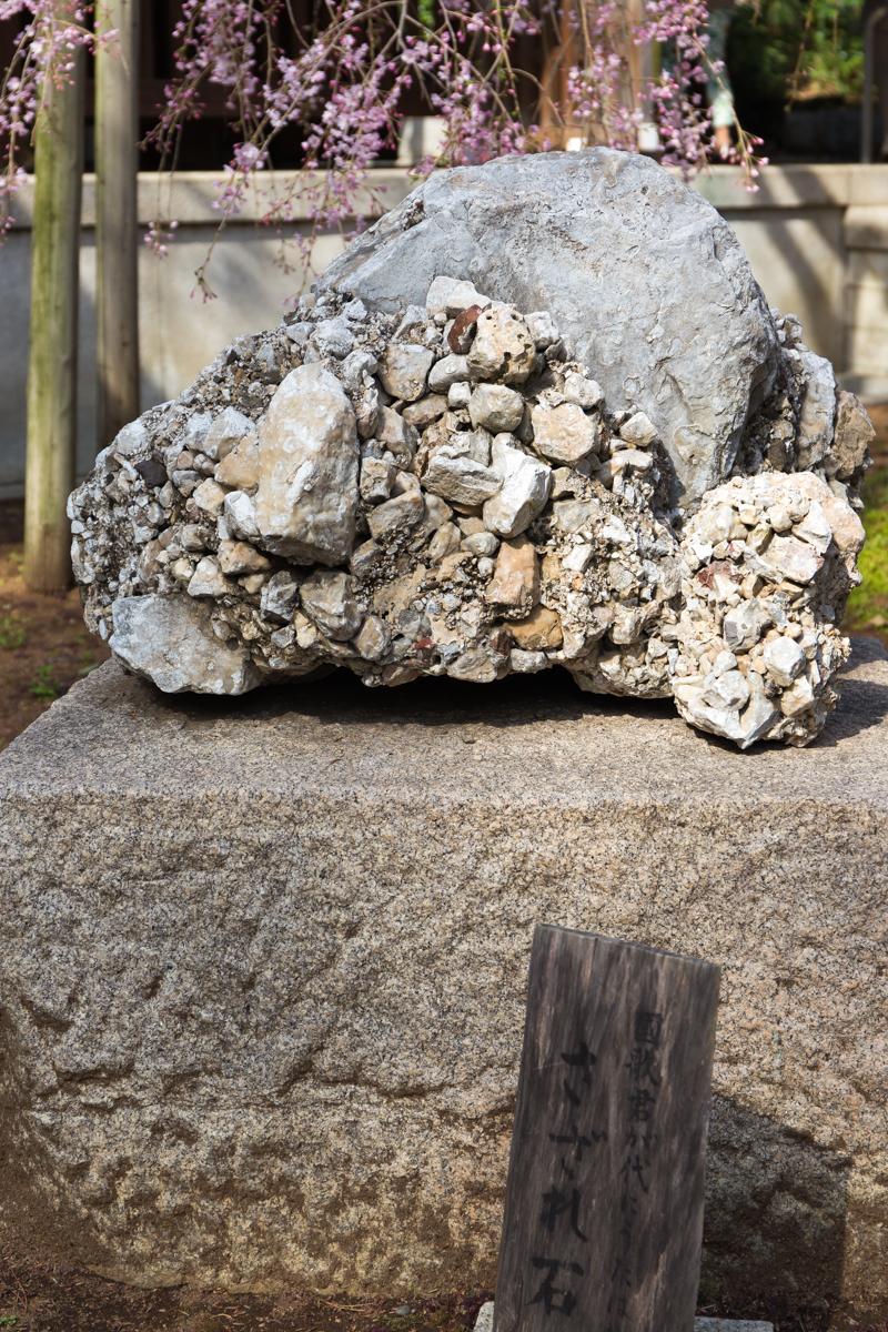 乃木神社(7)