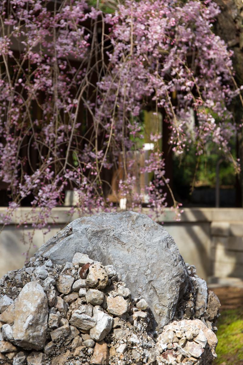乃木神社(8)