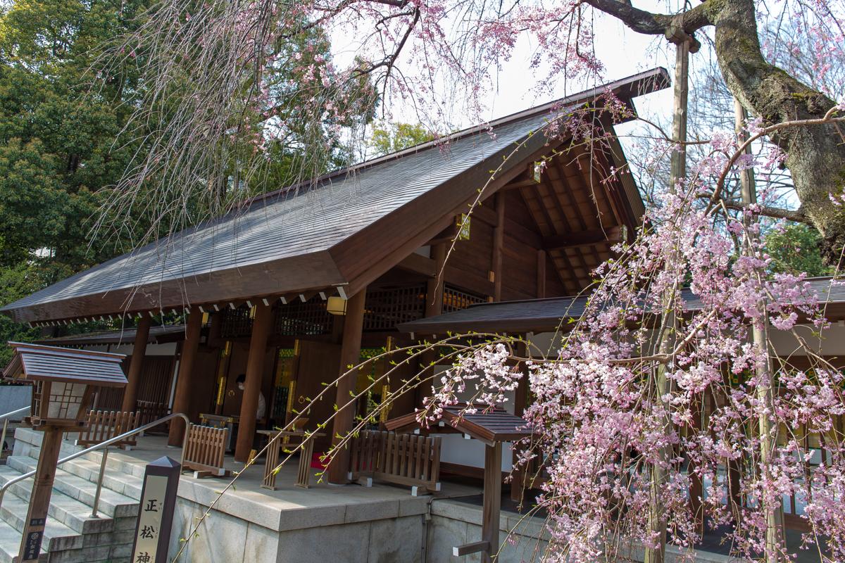 乃木神社(9)