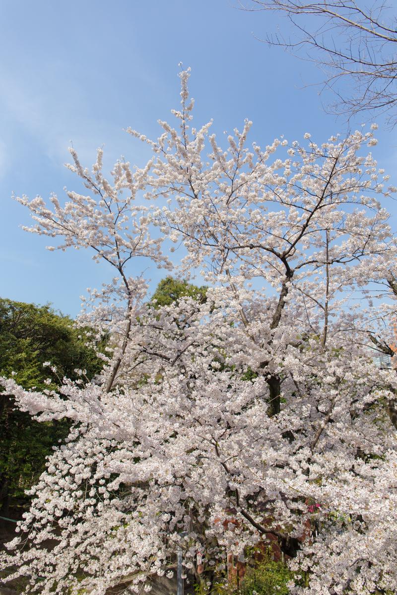 乃木神社(13)