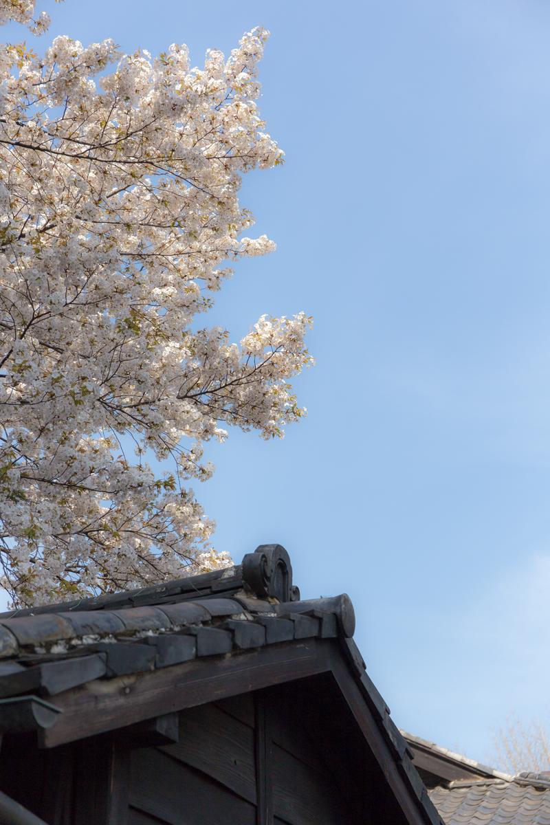 乃木神社(17)