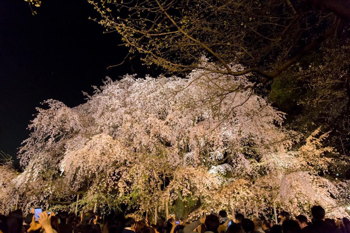 sakura2014_2(1)