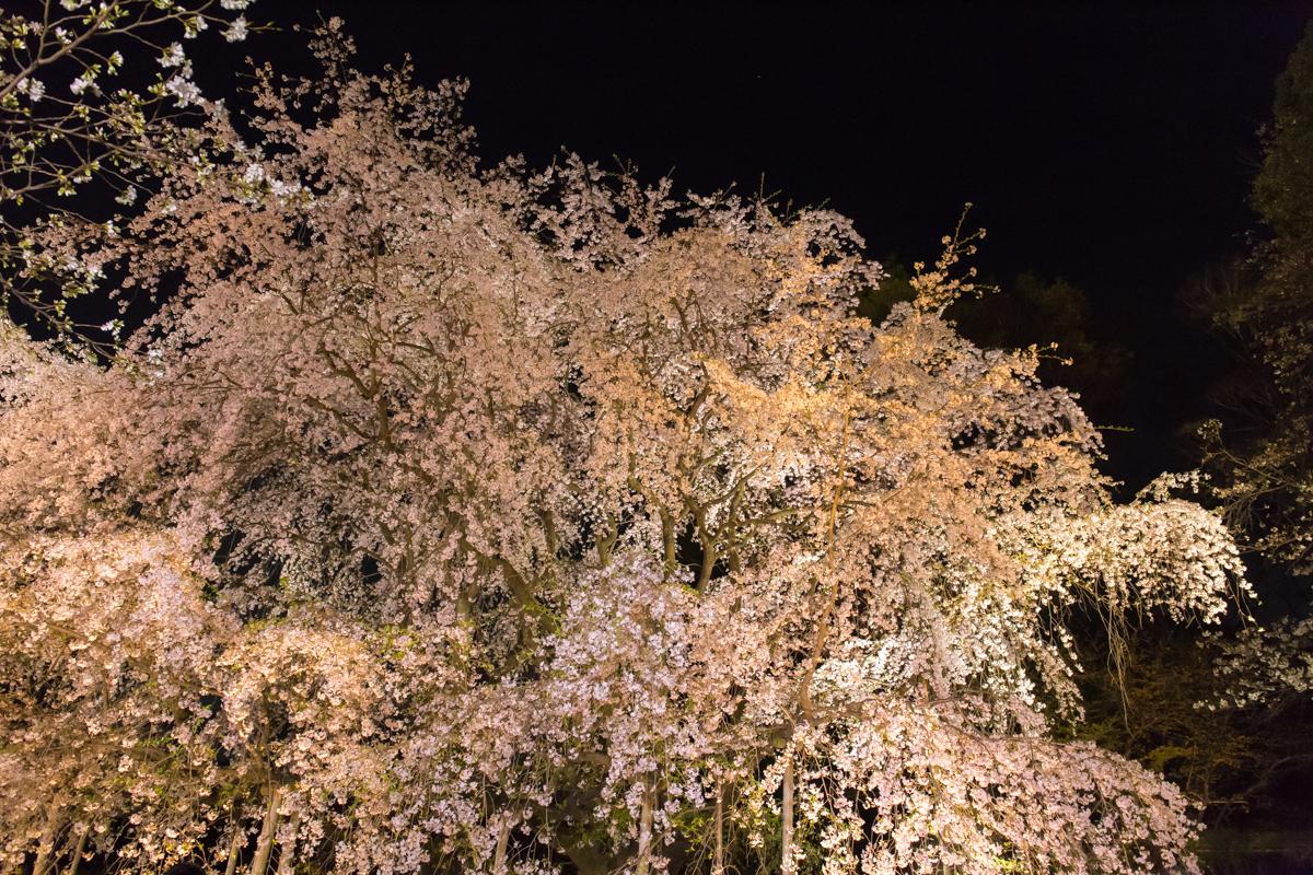 sakura2014_2(2)