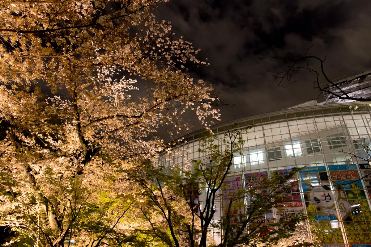 sakura2014_2(9)