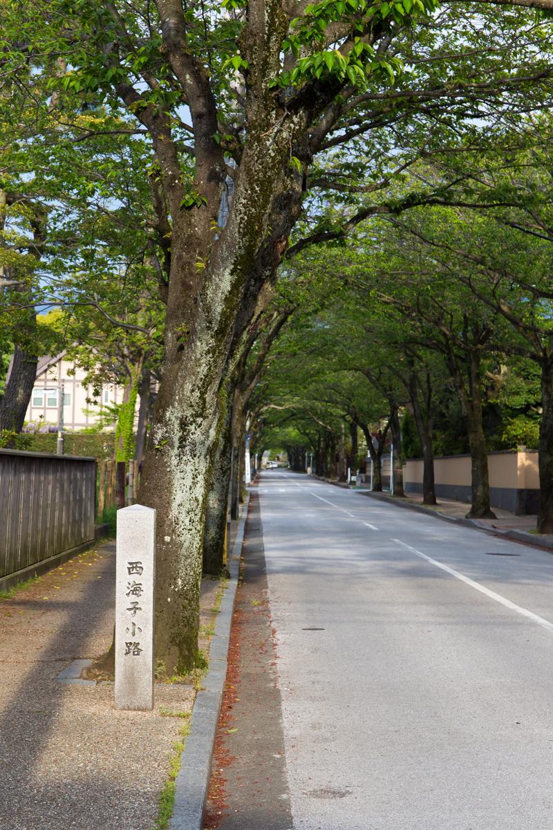 小田原の朝(3)