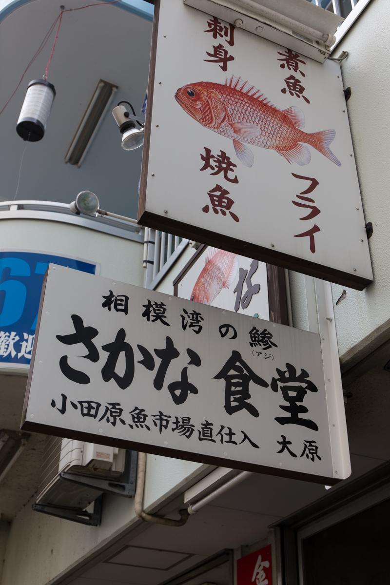 小田原の朝(5)