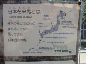 日本在来馬