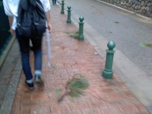 飛ばされてきた樹の枝1