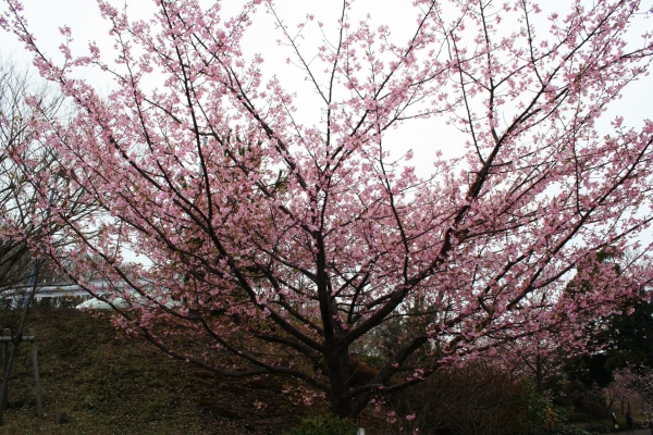 s140301王冠桜