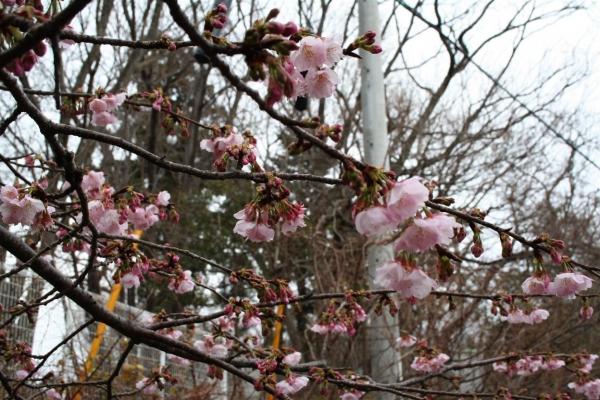 s140301王冠桜2