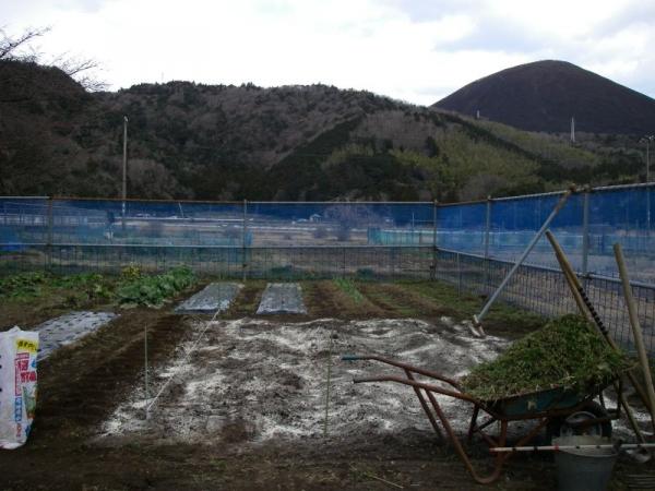 s140310里芋畑