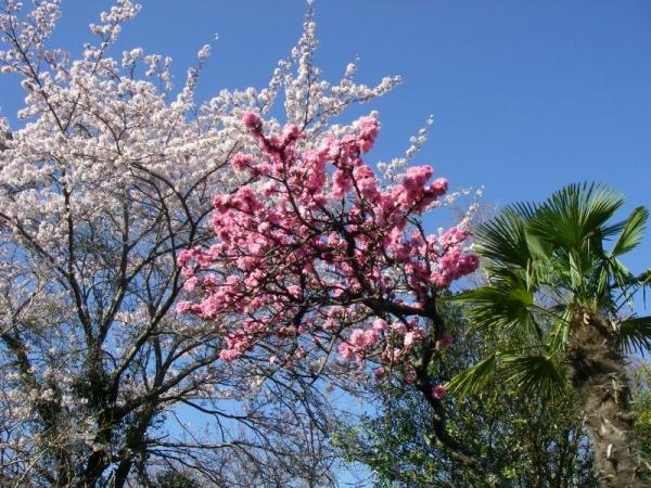 s140331桜