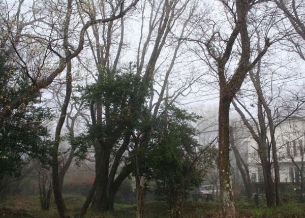 s140404霧1