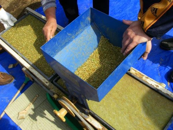 s140412米種蒔き1
