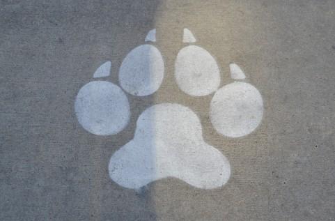 dog976.jpg