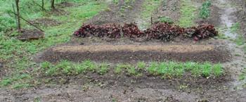 1年草種まきデッキから260330