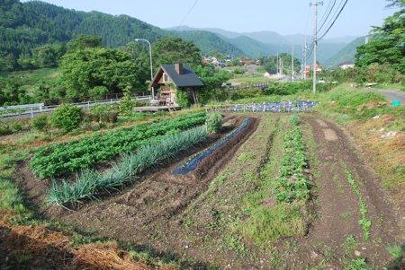 野菜畑 斜め260528