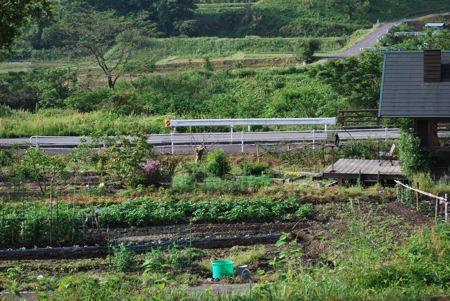 野菜畑横260528