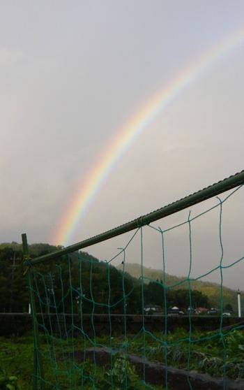虹とさやえんどう