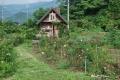 花畑260614