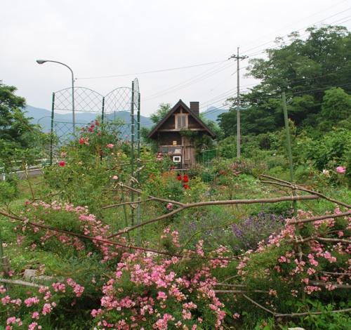 花畑260617