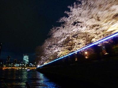 20140402KAMOME_yorusakura.jpg