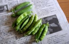 greenpeas.jpg
