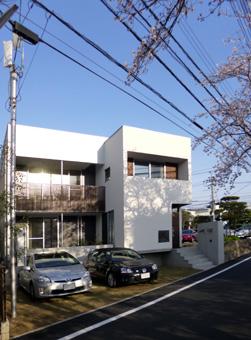 桜町の桜03
