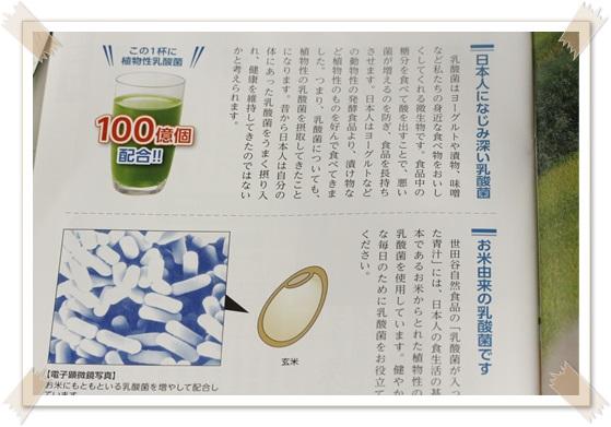 乳酸菌が入った青汁