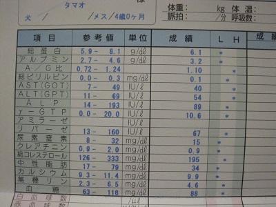 玉緒検査結果14