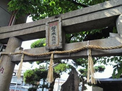 matsunokidaiDCIM0734.jpg