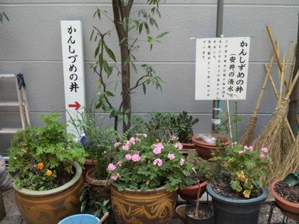 yasuijinjaDCIM0608.jpg