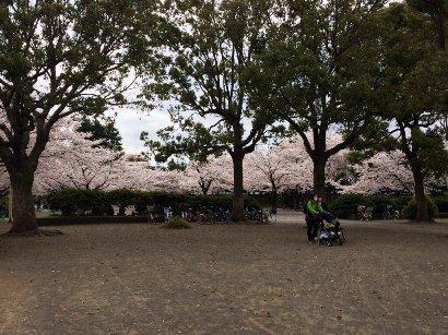 20140402等々力絶好の桜スポット
